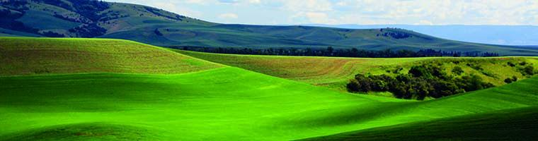Green Palouse wheatfields