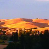 Zenner palouse hills